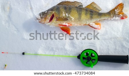 Winter ice fishing perch and rod