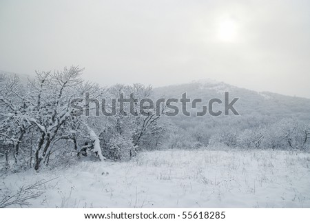 Winter icy forest with beautiful trees - stock photo