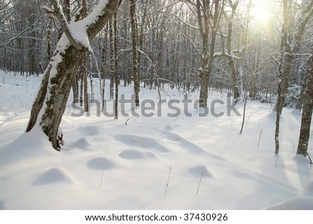 Winter icy landscape with bright shining day - stock photo