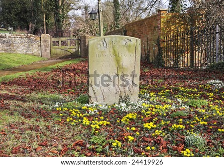 Winter in an English Churchyard with Aconites and snowdrops around an ancient Headstone
