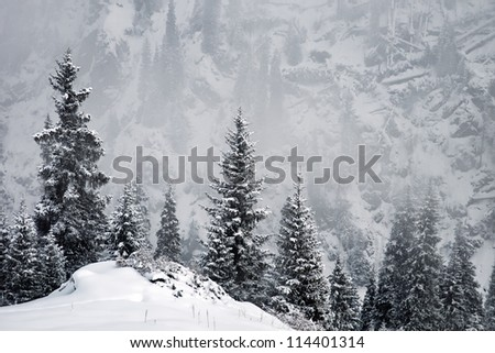 Winter in the mountains and windbreak after Hurricane - stock photo