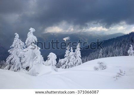 Winter in the mountains, trees covered with snow. beautiful sunlight