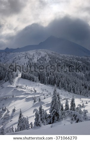 Winter in the mountains, trees covered with snow. beautiful sunlight - stock photo