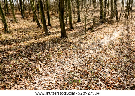 Winter is coming: path leading thrugh the late autumnal forrest