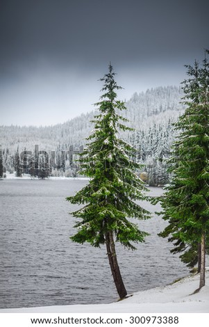 Winter lake shore with evergreen forest covered with snow - stock photo