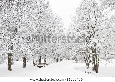 Winter landscape - alley in forest, trees with snow-covered branches. - stock photo
