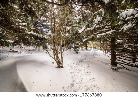 Winter Landscape along the Appalachian Trail in the Great Smoky Mountains National Park  - stock photo