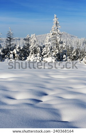 Winter landscape and snow wrapped trees in Sumava, Czech republic