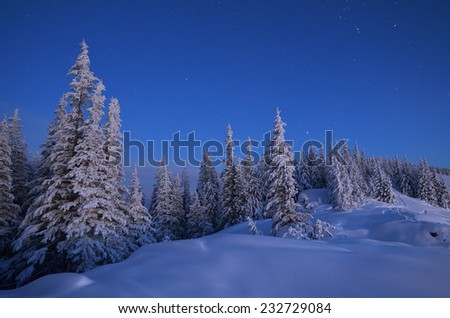 Winter landscape at dusk.Forest in snow - stock photo