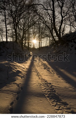 winter landscape at evening, forest track at sundown