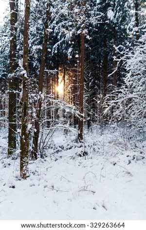 Winter landscape at sunset with trees in snow - stock photo
