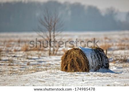 Winter landscape, bale of hay in a field. - stock photo