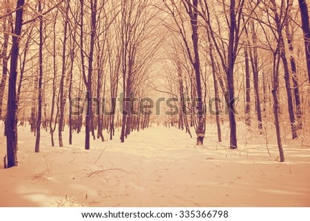 Winter landscape. Branches of trees under the fluffy snow. retro - stock photo