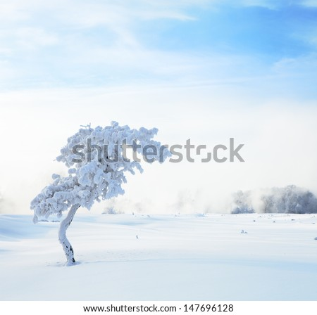 Winter landscape. Cold winter evening - stock photo