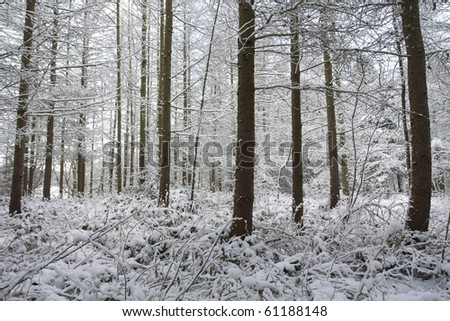 Winter landscape covered in snow