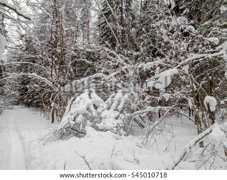 Winter landscape. Eastern Europe woods - forest under the snow