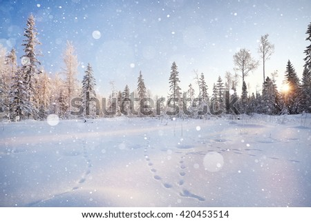 winter landscape, fir forest in frost and traces of animals on the snow - stock photo