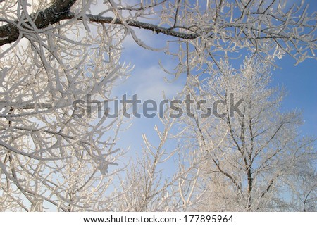 Winter landscape frosty misty morning on the river and trees in hoarfrost - stock photo