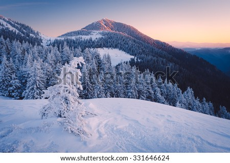Winter Landscape frosty morning. Mountains under the snow. Carpathians, Ukraine, Europe. Low contrast. Color toning