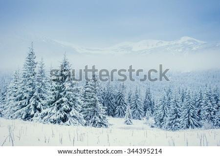 Winter landscape glowing by sunlight. Dramatic wintry scene. Carpathian, Ukraine, Europe. - stock photo