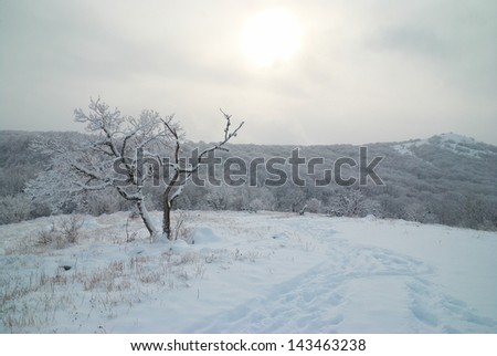 Winter landscape- icy forest with beautiful trees - stock photo