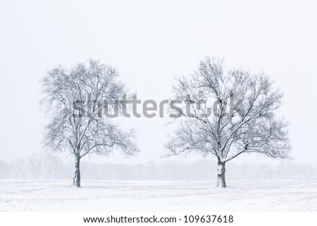 Winter landscape in black and white of snow flocked trees in a rural landscape, Michigan, USA - stock photo