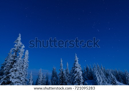 Winter landscape in blue tones. Snowy trees in a mountain forest. Starry sky