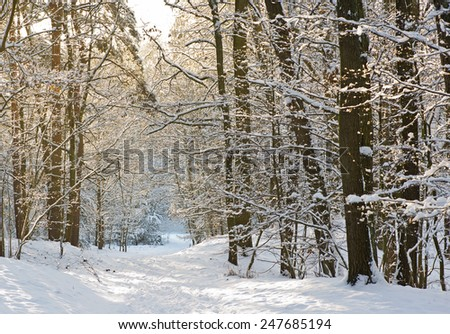 Winter landscape in forest at a sunny day - stock photo