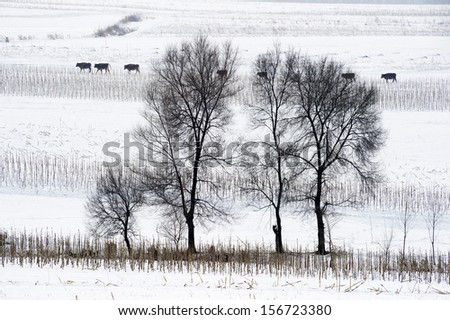 Winter landscape in forest with pines after snowfall - stock photo