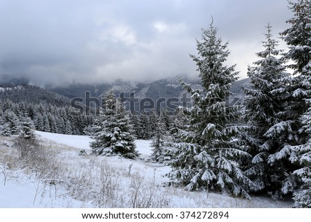 Winter landscape in mountain forest - stock photo