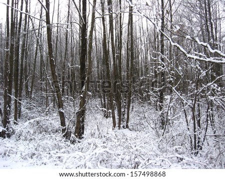 Winter landscape in the forest with pines and snowdrifts - stock photo