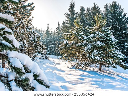 winter landscape in the middle of the winter  - stock photo