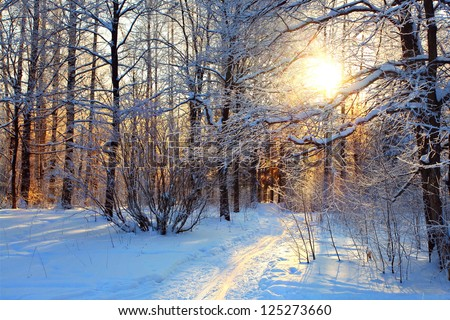 winter landscape in the park on a sunny day, the trails in the snow and frost on trees - stock photo