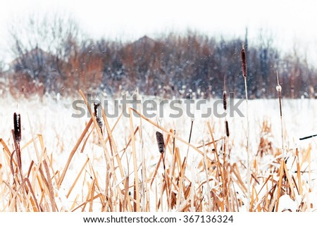 winter landscape in the village. reeds in the snow in a forest. Sunlight - stock photo