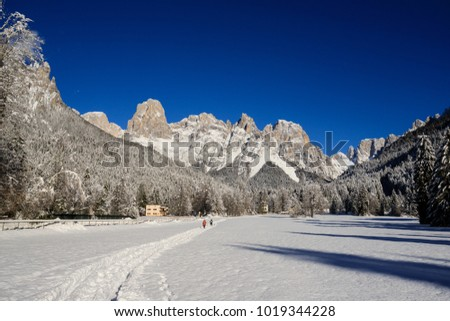 winter landscape in Val Canali, in the natural park of Paneveggio - Trentino