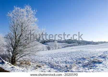 Winter landscape, Jutland, Denmark. Everything is covered in a thik layer of rime on those freezing cold days with temperatures down to - 15 degrees centigrade. - stock photo