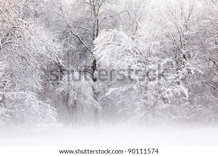 Winter landscape of a snow flocked forest, Fort Custer State Park, Michigan, USA