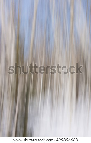 Winter landscape of aspen tree forest blurred and defocused abstract white and blue background texture pattern
