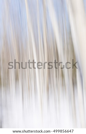 Winter landscape of aspen tree forest blurred and defocused as a white and blue nature abstract background texture pattern