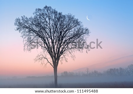 Winter landscape of bare trees and crescent moon at dawn, Fort Custer State Park, Michigan, USA - stock photo