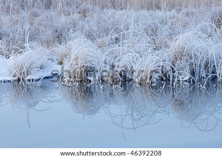 Winter landscape of frosted grasses and cattails on the shoreline of Tamarack Creek, Michigan, USA