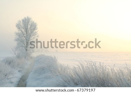 Winter landscape of frosted tree on the edge of the river on a foggy morning. - stock photo