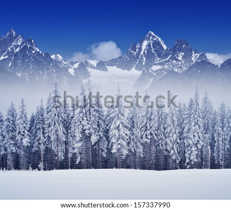 Winter landscape overcast day with fir trees in the mountains - stock photo