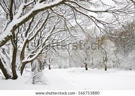 Winter landscape - park with trees in snow and branches of big tree in front.