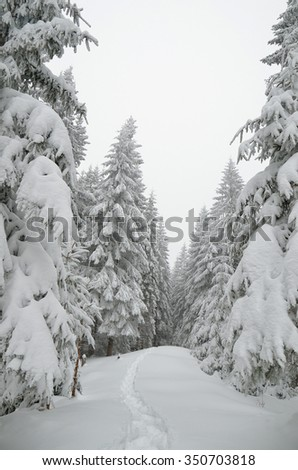 Winter landscape. Path in the snow. Spruce forest in mountains. Cloudy day. Carpathians, Ukraine, Europe - stock photo