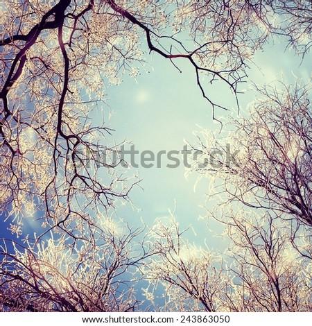 Winter landscape. Retro stale. - stock photo