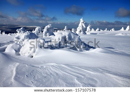 Winter landscape - snow covered trees.