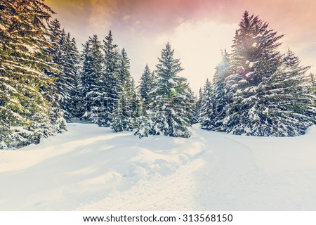 Winter landscape, snow-covered trees in swiss Alps, filtered - stock photo