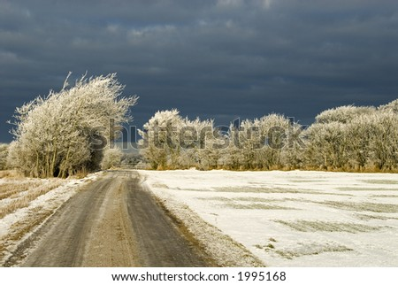 Winter landscape. Snow storm coming up behind the white rime covered trees. Western Jutland, Denmark. - stock photo