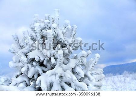 winter landscape snow trees white - stock photo